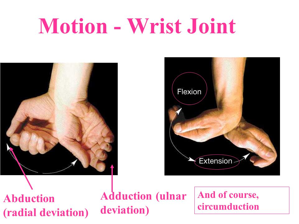 Motions of the Phalanges Flexion Extension Abduction Adduction + Circumduction