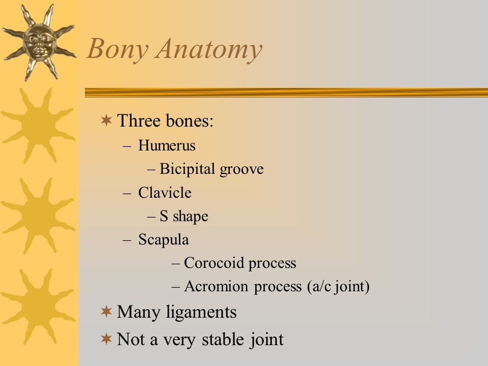 Bony Anatomy  Three bones: –Humerus –Bicipital groove –Clavicle –S shape –Scapula –Corocoid process –Acromion process (a/c joint)  Many ligaments 