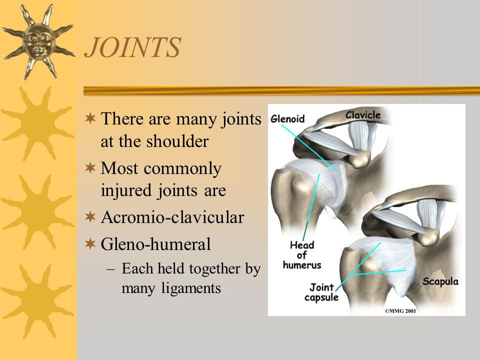 JOINTS  There are many joints at the shoulder  Most commonly injured joints are  Acromio-clavicular  Gleno-humeral –Each held together by many lig