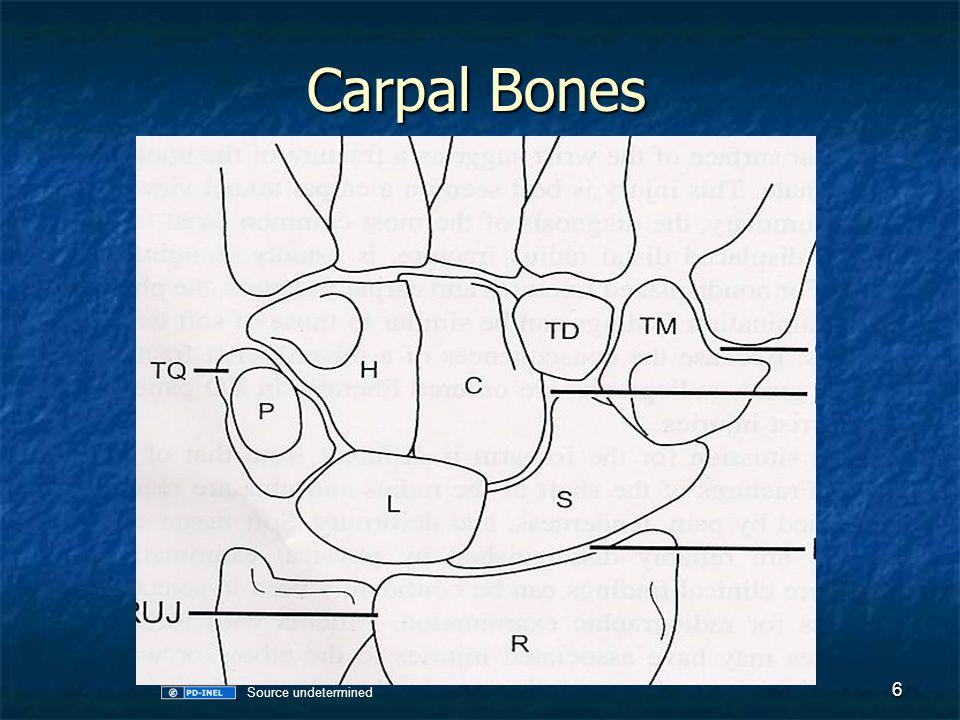 Carpal Bones 6 Source undetermined