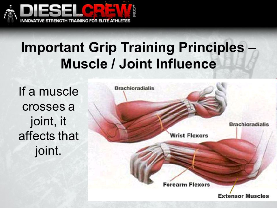 Important Grip Training Principles – Muscle / Joint Influence If a muscle crosses a joint, it affects that joint.
