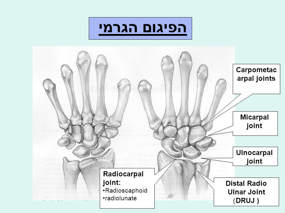 שכיחות השברים בעצמות שורש היד Scaphoid79% Triquetrum 14% Trapezium 2.3% Hamate 1.5% Lunate 1% Capitate 1% Trapezoid 0.2%