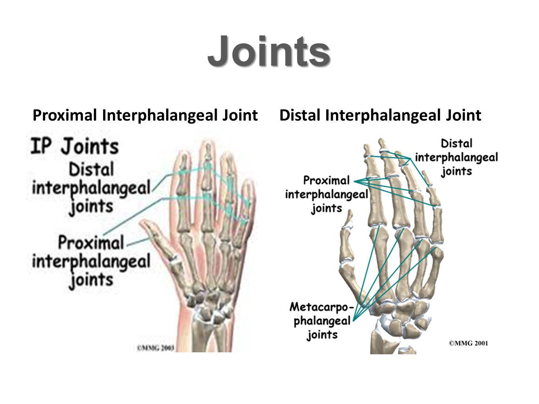 Joints Metacarpo-phalangeal Joint