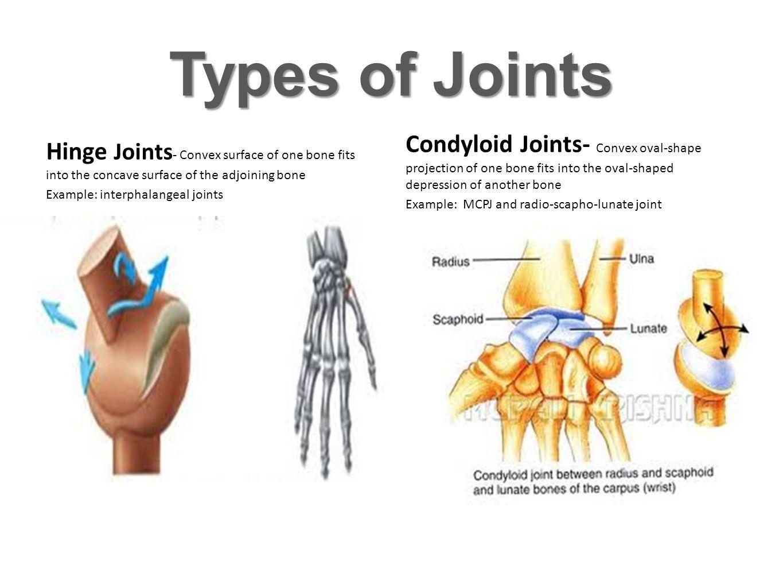 Joints Proximal Interphalangeal JointDistal Interphalangeal Joint