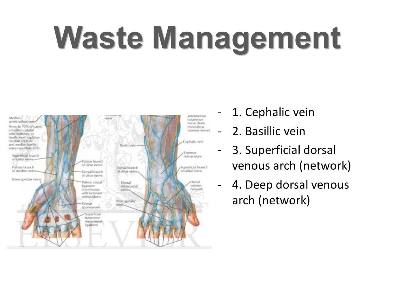 Posterior Interosseous Artery -supplies: - Abductor pollicis longus -Extensor pollicis brevis -Extensor pollicis longus