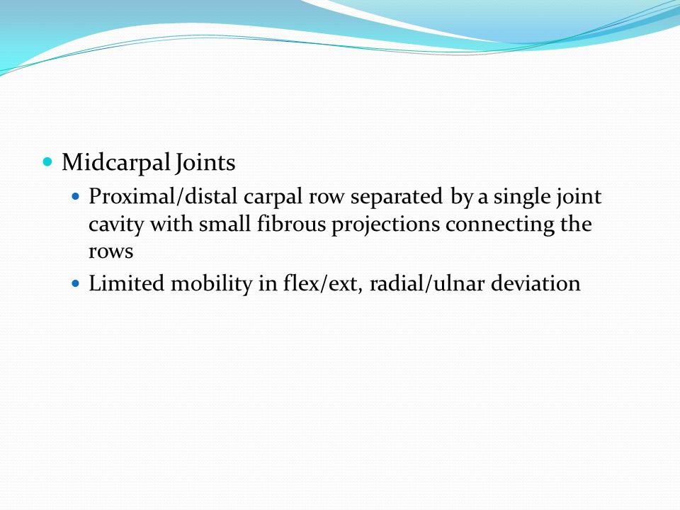 Midcarpal Joints Proximal/distal carpal row separated by a single joint cavity with small fibrous projections connecting the rows Limited mobility in