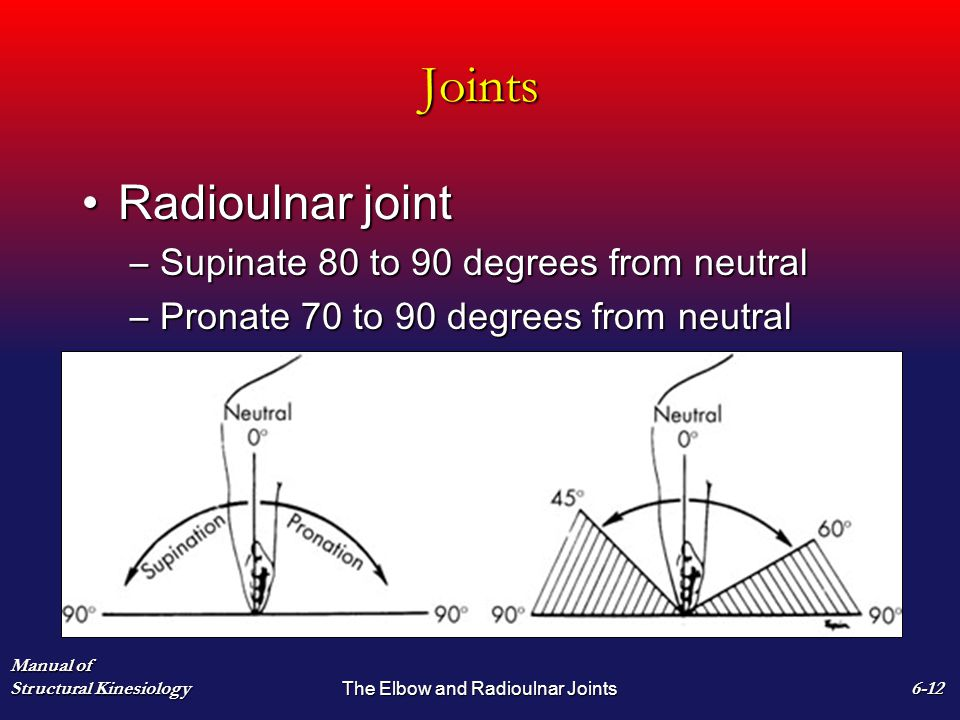 Joints Radioulnar jointRadioulnar joint –Supinate 80 to 90 degrees from neutral –Pronate 70 to 90 degrees from neutral Manual of Structural Kinesiology The Elbow and Radioulnar Joints 6-12