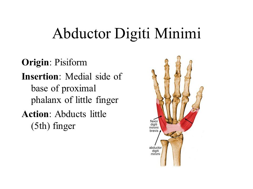 Abductor Digiti Minimi Origin: Pisiform Insertion: Medial side of base of proximal phalanx of little finger Action: Abducts little (5th) finger