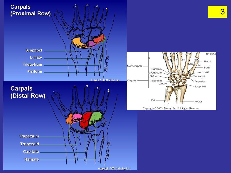 44 PATHOLOGY FOR UPPER EXTREMITY 1 SEE CHART PG ______ Avulsion fx Bone cyst Bursitis fractures Joint effusion Osteoporosis Rheumatoid Arthritis