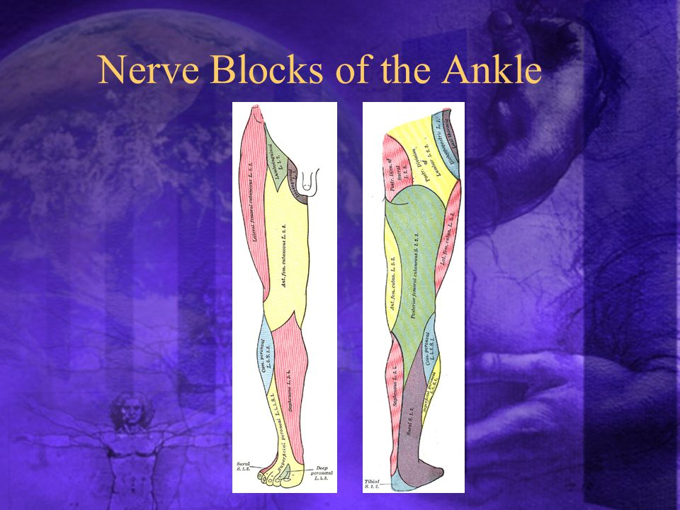 Nerve Blocks of the Ankle