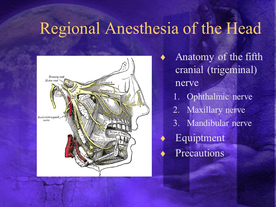  Anatomy of the fifth cranial (trigeminal) nerve 1.Ophthalmic nerve 2.Maxillary nerve 3.Mandibular nerve  Equiptment  Precautions