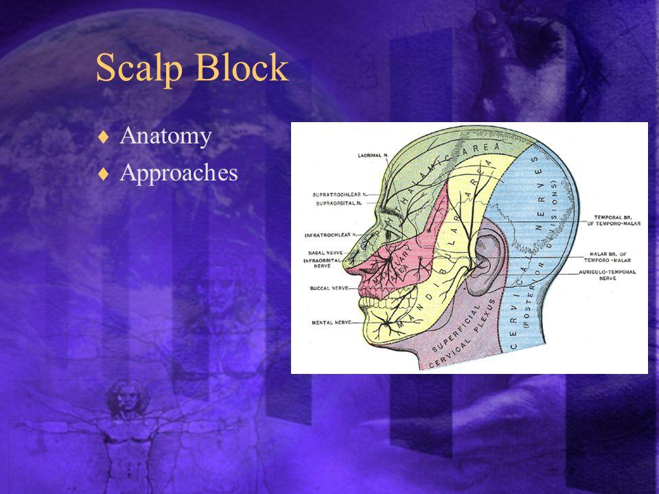 Scalp Block  Anatomy  Approaches