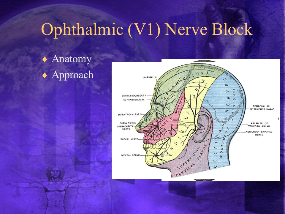 Ophthalmic (V1) Nerve Block  Anatomy  Approach