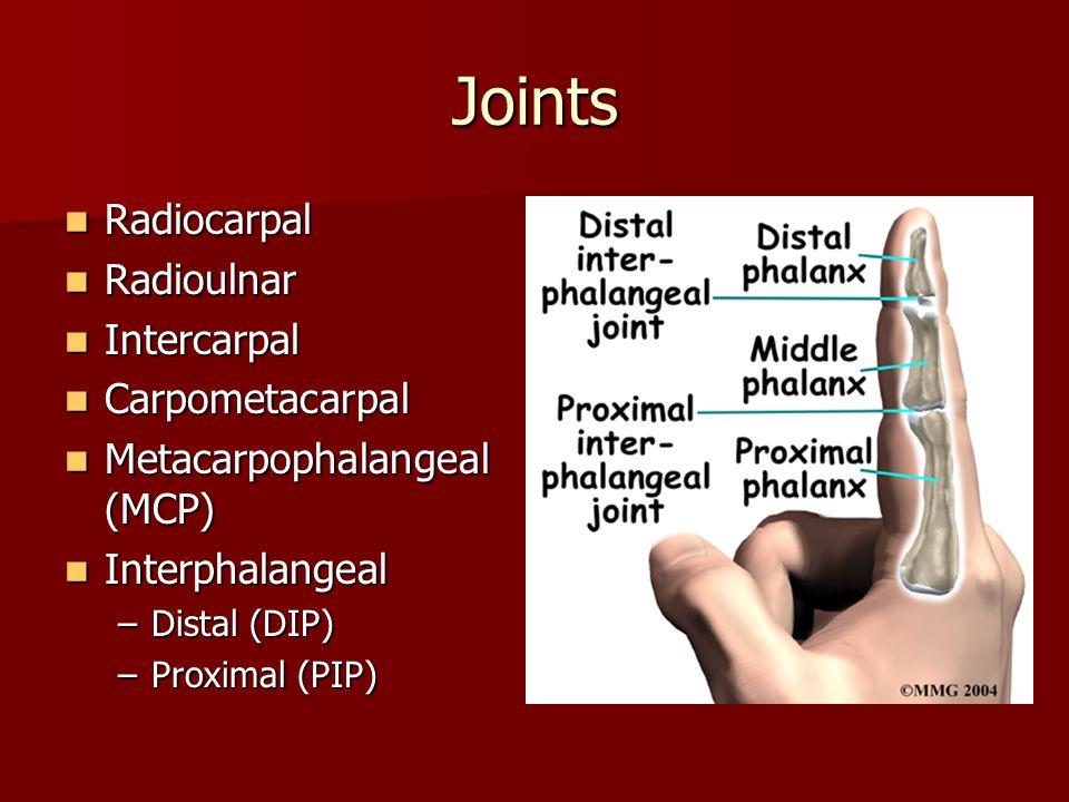 Joints Radiocarpal Radiocarpal Radioulnar Radioulnar Intercarpal Intercarpal Carpometacarpal Carpometacarpal Metacarpophalangeal (MCP) Metacarpophalangeal (MCP) Interphalangeal Interphalangeal –Distal (DIP) –Proximal (PIP)