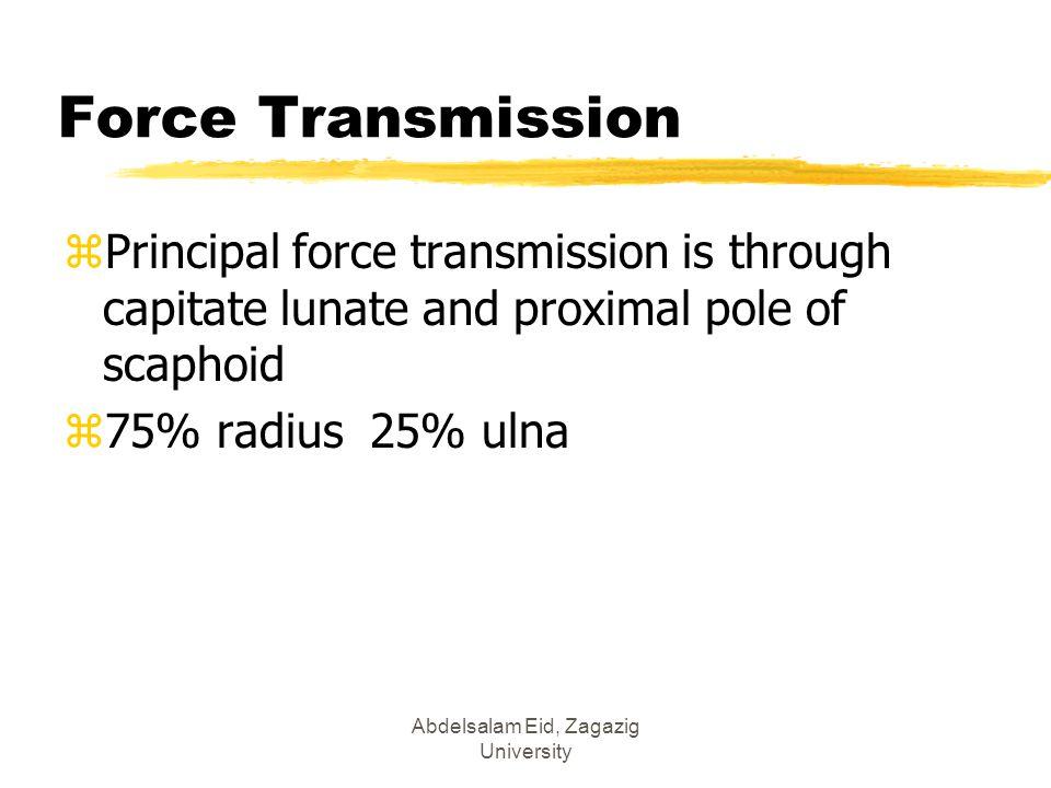 Abdelsalam Eid, Zagazig University Force Transmission zPrincipal force transmission is through capitate lunate and proximal pole of scaphoid z75% radi