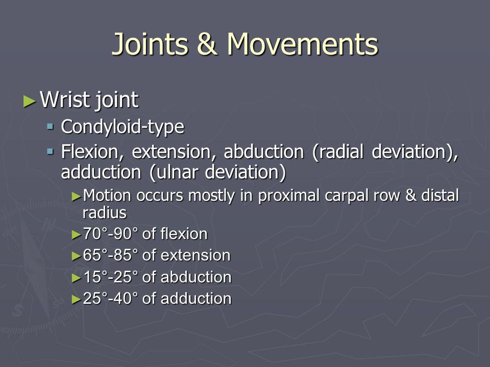 Joints & Movements ► Wrist joint  Condyloid-type  Flexion, extension, abduction (radial deviation), adduction (ulnar deviation) ► Motion occurs most