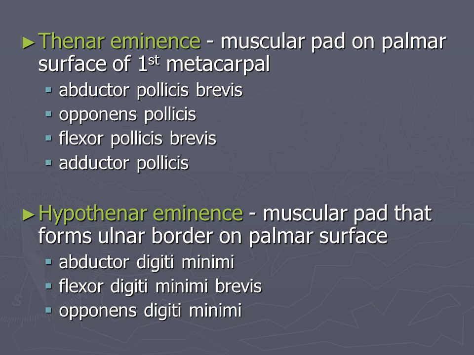 ► Thenar eminence - muscular pad on palmar surface of 1 st metacarpal  abductor pollicis brevis  opponens pollicis  flexor pollicis brevis  adduct