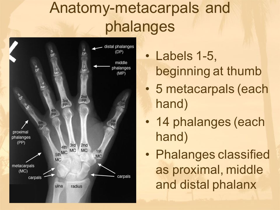 Anatomy-joints Named for the bones that comprise them Carpometacarpal (CMC) Metacarpal phalangeal (MCP) Proximal interphanlageal (PIP) Distal interphalangeal (DIP) http://www.gwc.maricopa.edu/class/bio2 01/hand/anhand.htmhttp://www.gwc.maricopa.edu/class/bio2 01/hand/anhand.htm