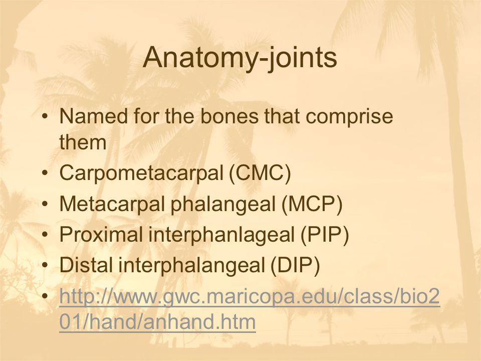 Anatomy-joints Named for the bones that comprise them Carpometacarpal (CMC) Metacarpal phalangeal (MCP) Proximal interphanlageal (PIP) Distal interpha