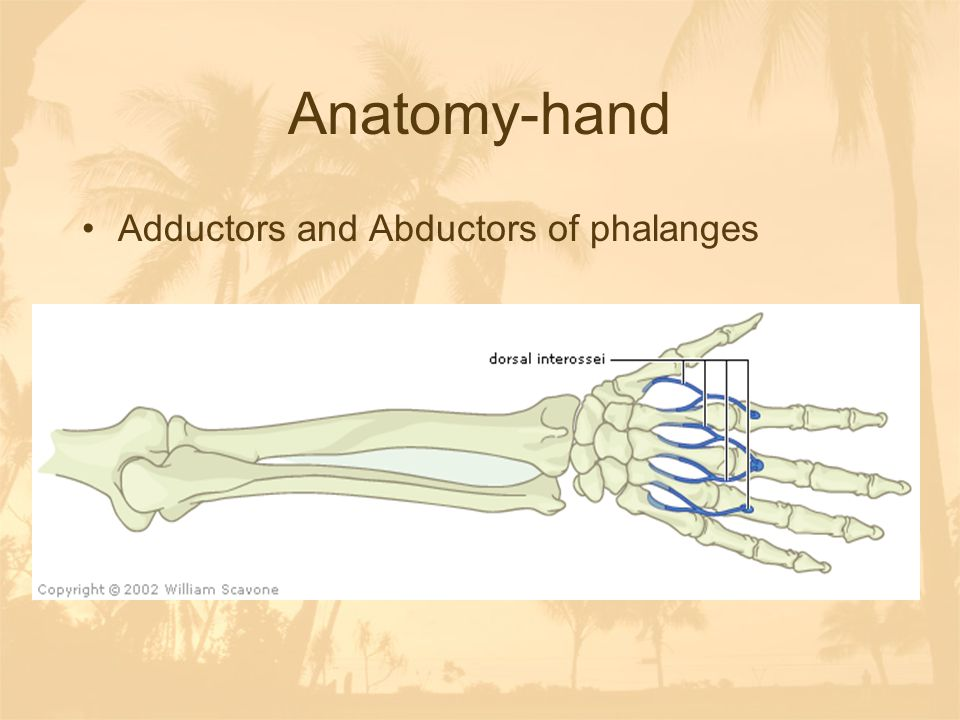 Dislocations of ICP or MCP joints One bone usually moves volar (palm side), and one dorsal Refer to physician for relocation because of tiny tendons, nerves and blood vessel movement Improper relocation can cause permanent damage