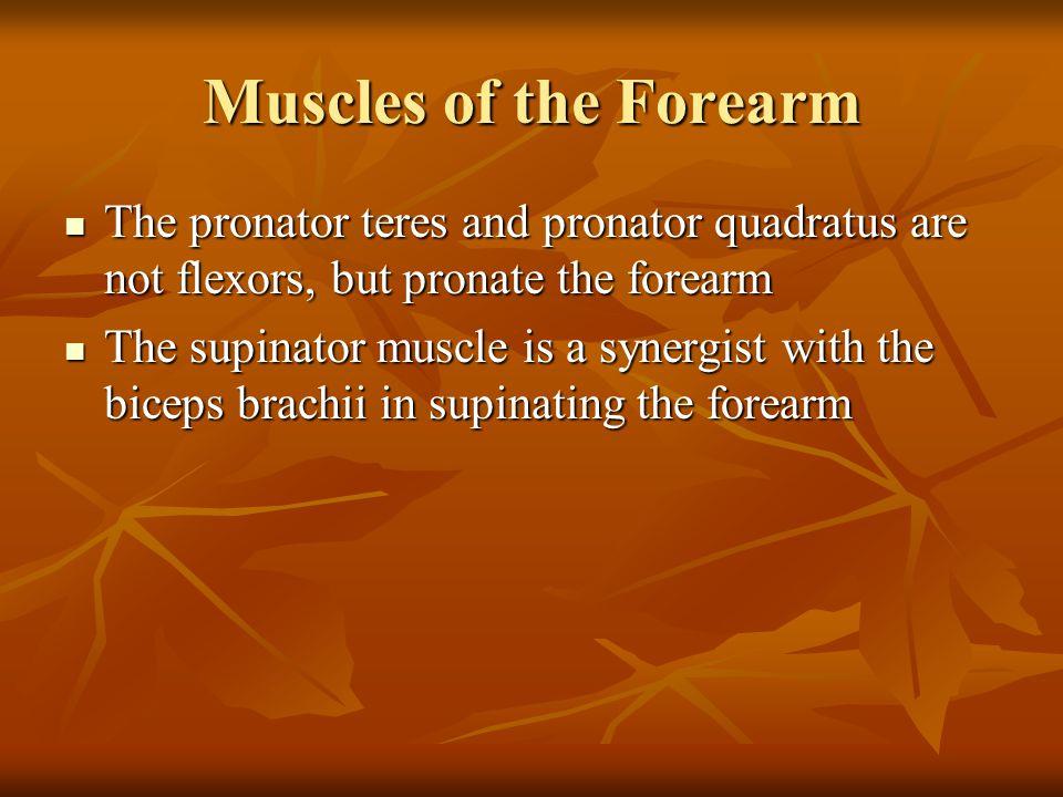 Muscles of the Forearm The pronator teres and pronator quadratus are not flexors, but pronate the forearm The pronator teres and pronator quadratus ar