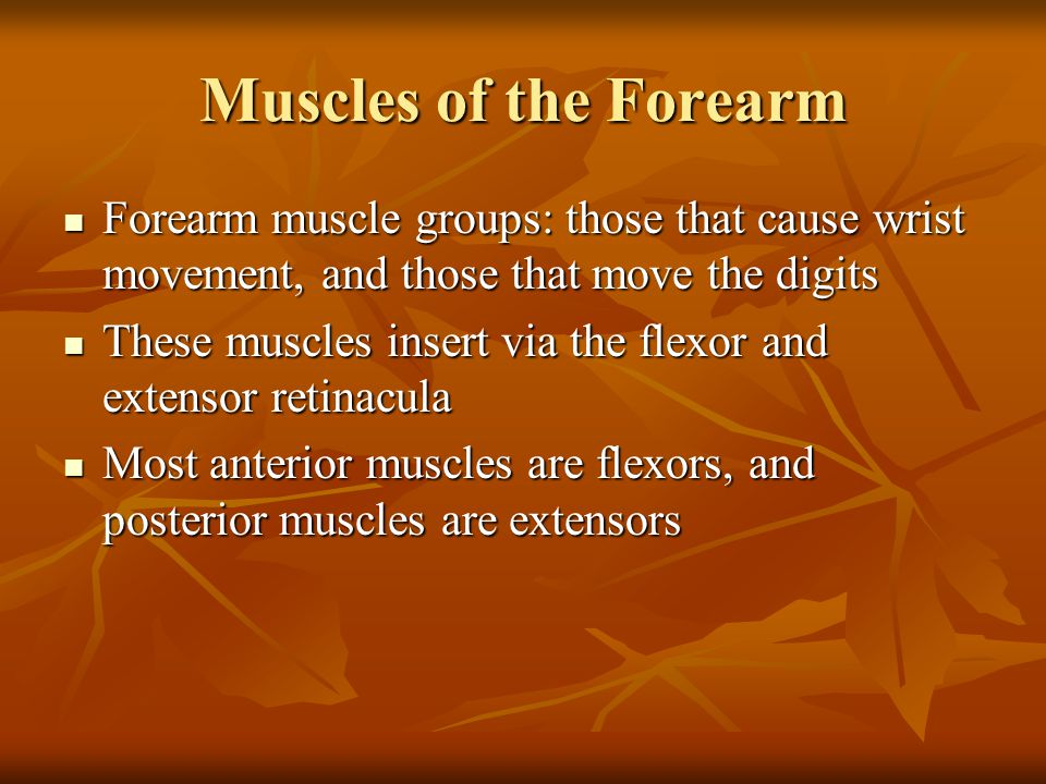 Muscles of the Forearm Forearm muscle groups: those that cause wrist movement, and those that move the digits Forearm muscle groups: those that cause