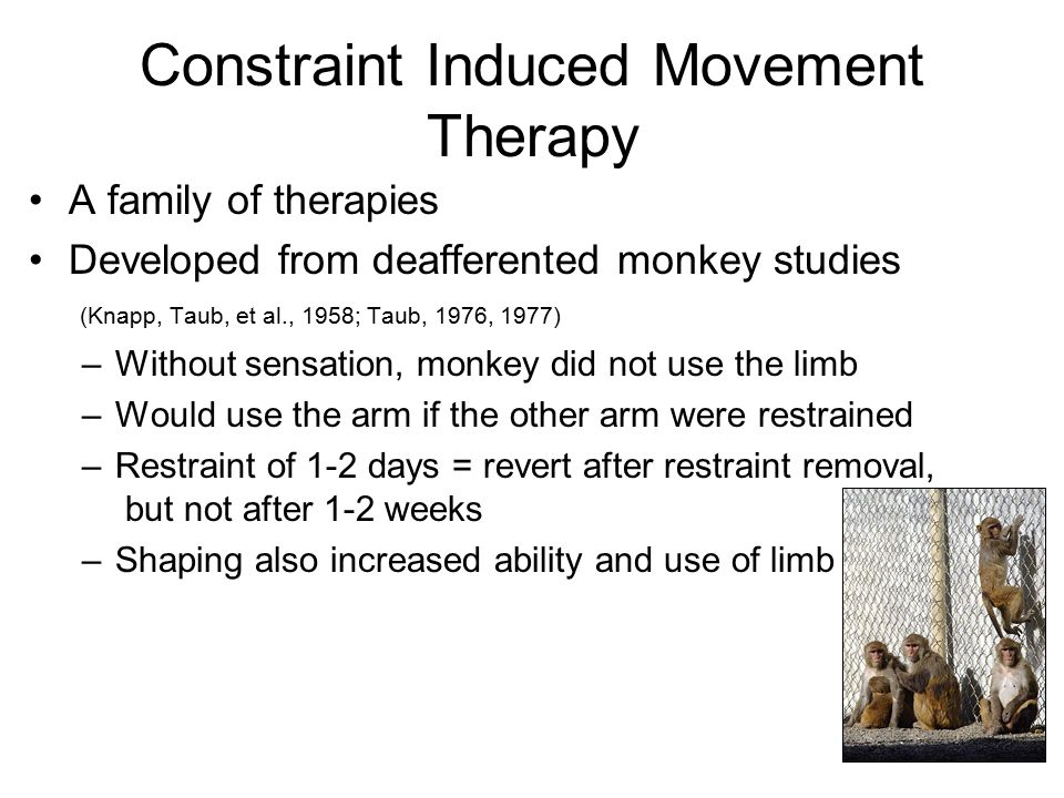 Constraint Induced Movement Therapy A family of therapies Developed from deafferented monkey studies (Knapp, Taub, et al., 1958; Taub, 1976, 1977) –Without sensation, monkey did not use the limb –Would use the arm if the other arm were restrained –Restraint of 1-2 days = revert after restraint removal, but not after 1-2 weeks –Shaping also increased ability and use of limb