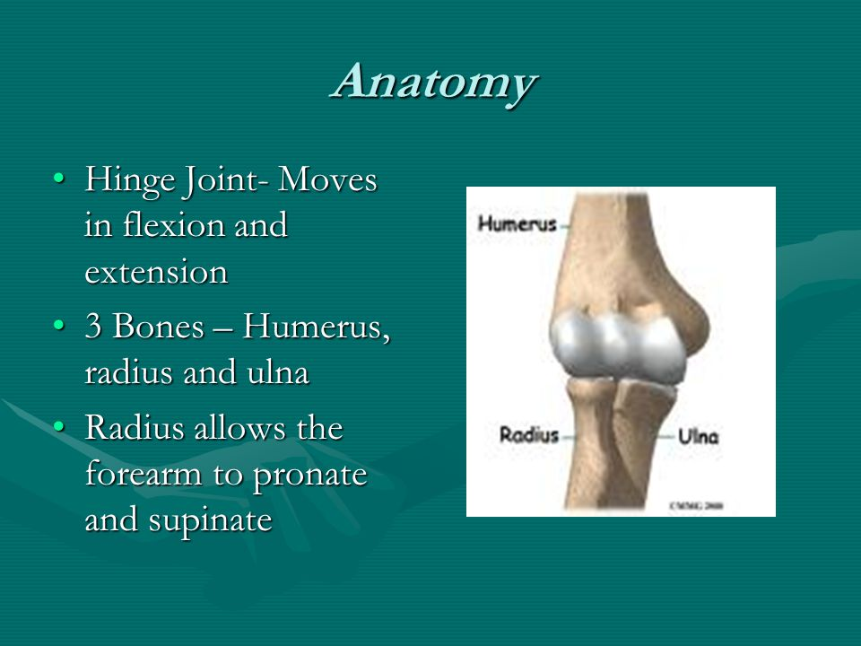 Anatomy Hinge Joint- Moves in flexion and extensionHinge Joint- Moves in flexion and extension 3 Bones – Humerus, radius and ulna3 Bones – Humerus, radius and ulna Radius allows the forearm to pronate and supinateRadius allows the forearm to pronate and supinate
