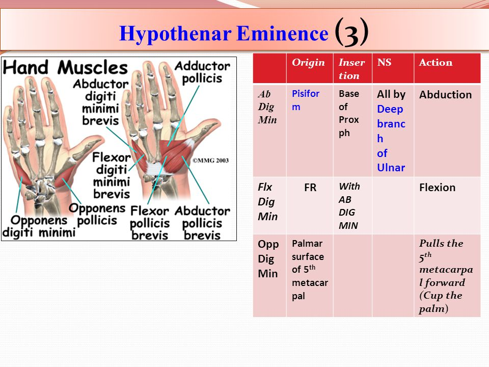 Hypothenar Eminence (3) ActionNSInser tion Origin AbductionAll by Deep branc h of Ulnar Base of Prox ph Pisifor m Ab Dig Min Flexion With AB DIG MIN F