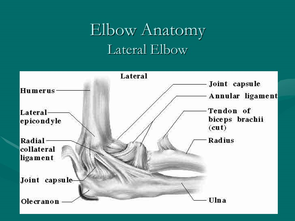 Elbow Anatomy Lateral Elbow