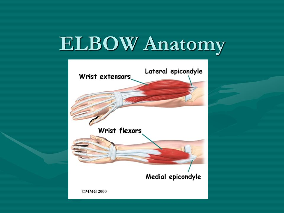 ELBOW Anatomy ELBOW Anatomy