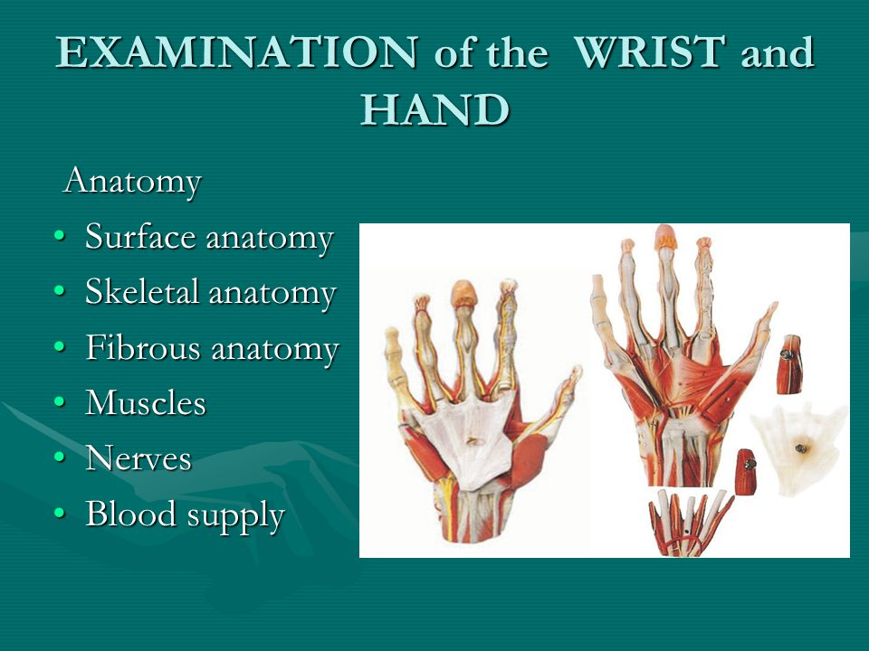 EXAMINATION of the WRIST and HAND Anatomy Anatomy Surface anatomySurface anatomy Skeletal anatomySkeletal anatomy Fibrous anatomyFibrous anatomy MusclesMuscles NervesNerves Blood supplyBlood supply