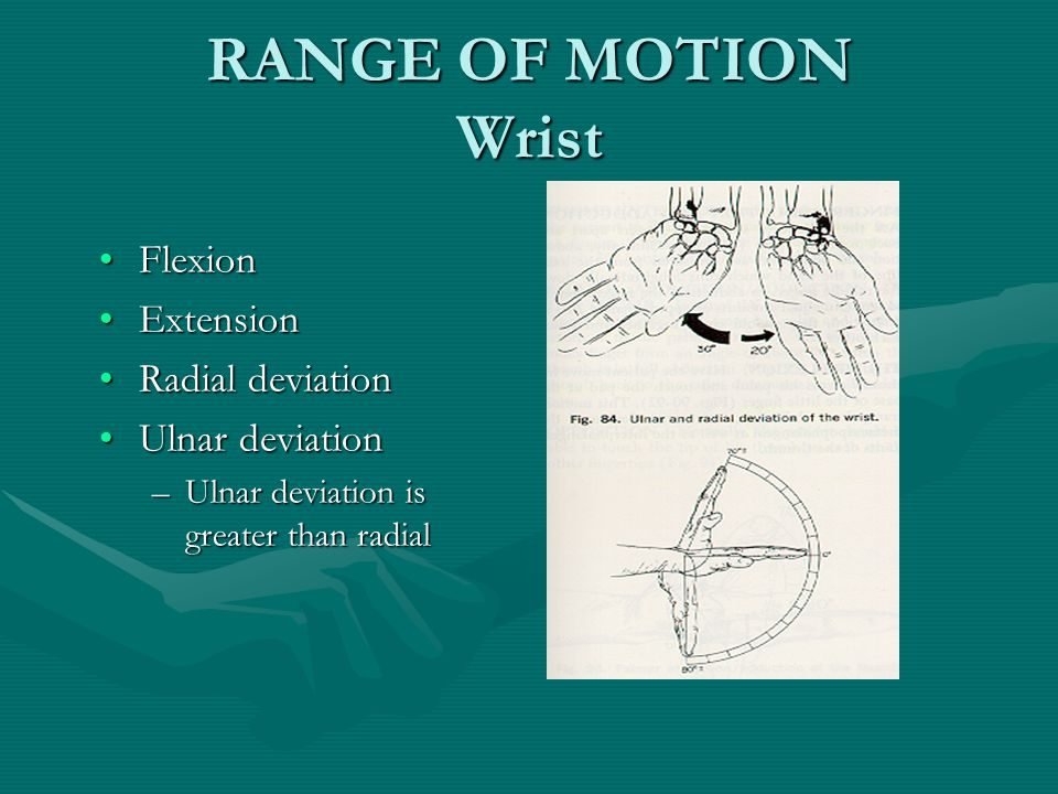 RANGE OF MOTION Wrist FlexionFlexion ExtensionExtension Radial deviationRadial deviation Ulnar deviationUlnar deviation –Ulnar deviation is greater than radial