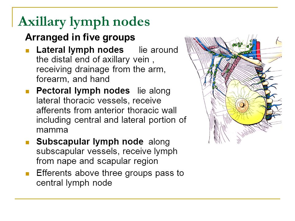 Axillary lymph nodes Arranged in five groups Lateral lymph nodes lie around the distal end of axillary vein, receiving drainage from the arm, forearm,