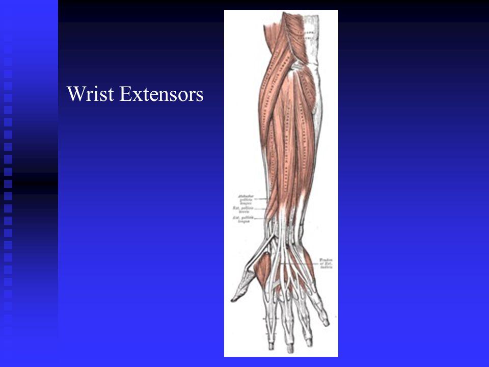 Wrist Extensors