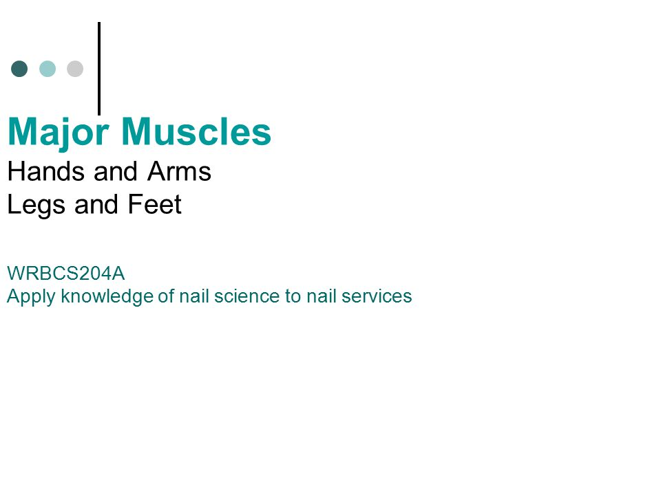 Major Muscles Hands and Arms Legs and Feet WRBCS204A Apply knowledge of nail science to nail services