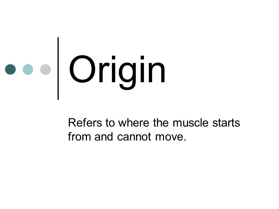 Origin Refers to where the muscle starts from and cannot move.