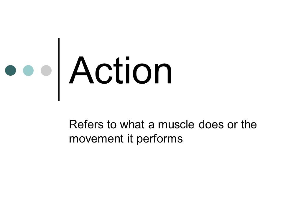 Action Refers to what a muscle does or the movement it performs