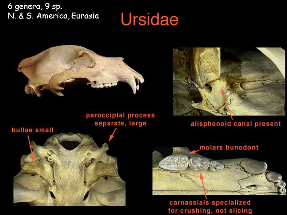 6 genera, 9 sp. N. & S. America, Eurasia