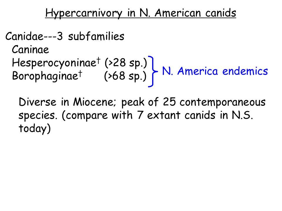 Hypercarnivory in N.