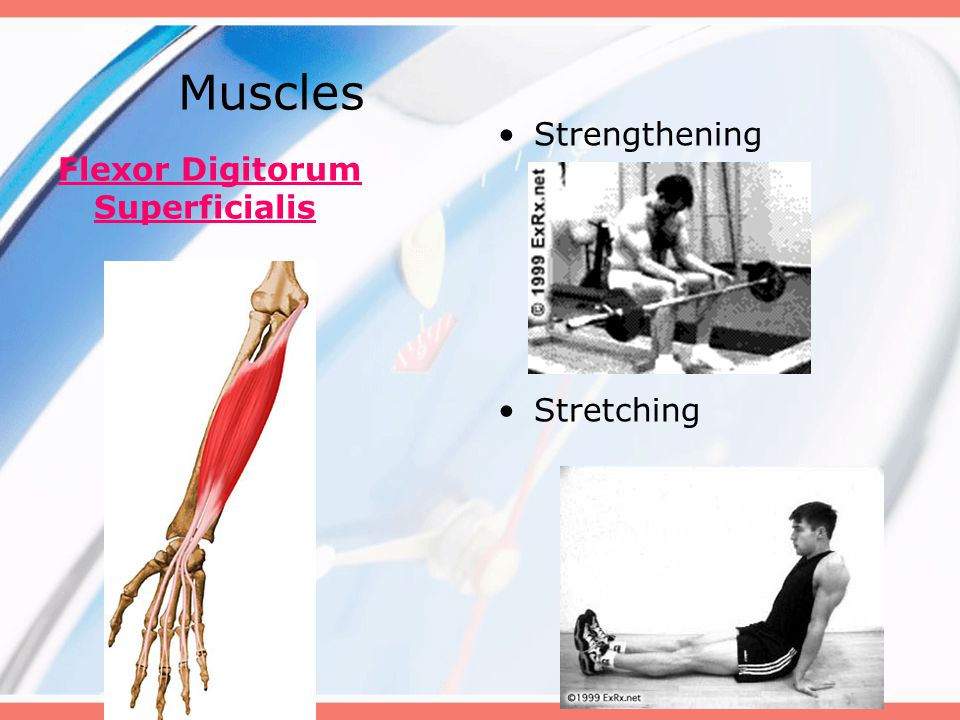 Muscles Flexor Digitorum Superficialis Strengthening Stretching