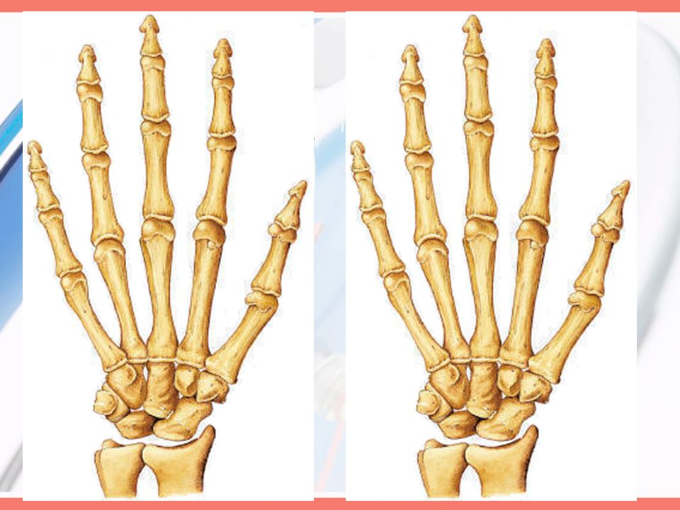 Joints Intercarpal (Arthrodial) Intermetacarpal (Arthrodial) Metacarpophalangeal (Condylodial) –Movement and ROM Flexion: 90° Extension: 0-40° –Metaca