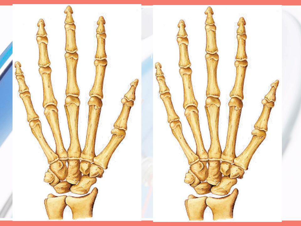 Joints Carpometacarpal of the thumb: (seller) –Movement and ROM Flexion: 15º to 45º Extension: 0º to 20º Abduction: 50º to 70º Opposition:Opposition –