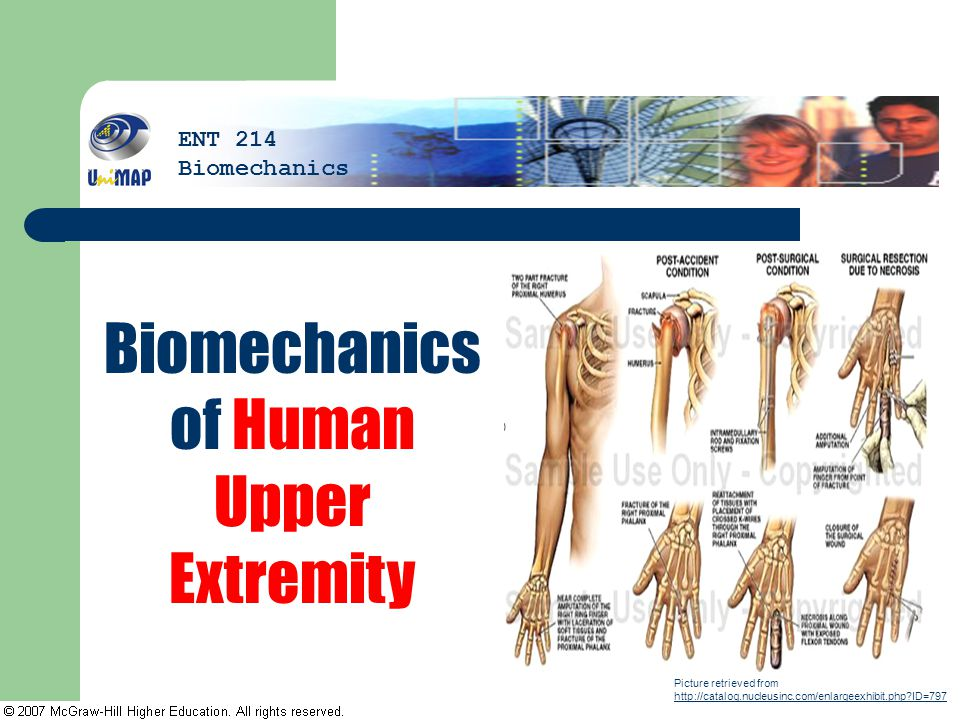 Biomechanics of Human Upper Extremity Picture retrieved from http://catalog.nucleusinc.com/enlargeexhibit.php?ID=797 http://catalog.nucleusinc.com/enl