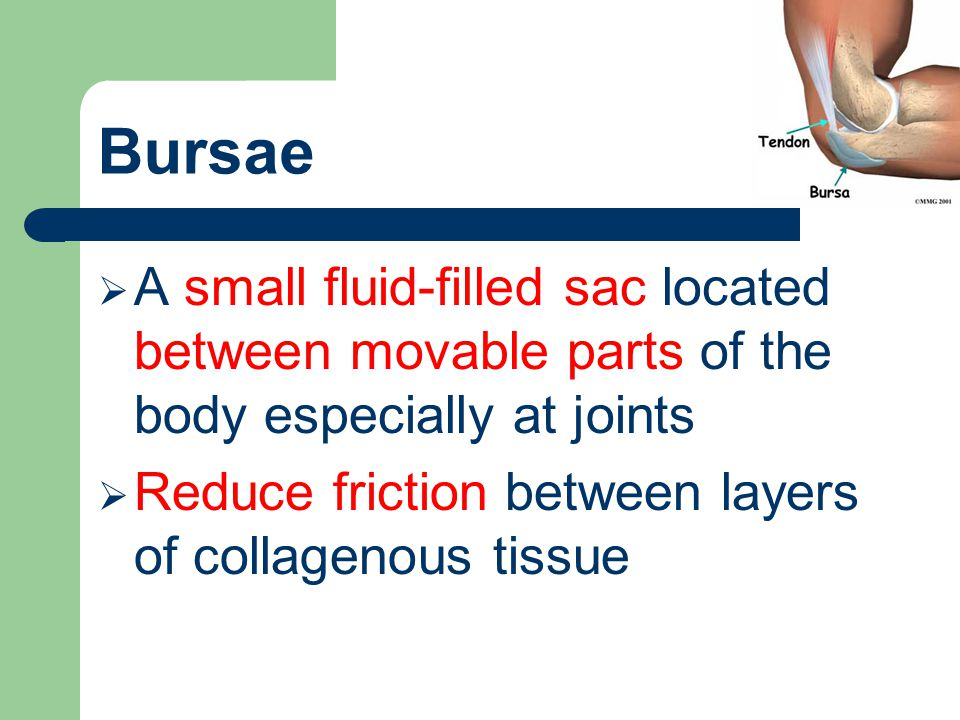 Bursae  A small fluid-filled sac located between movable parts of the body especially at joints  Reduce friction between layers of collagenous tissu