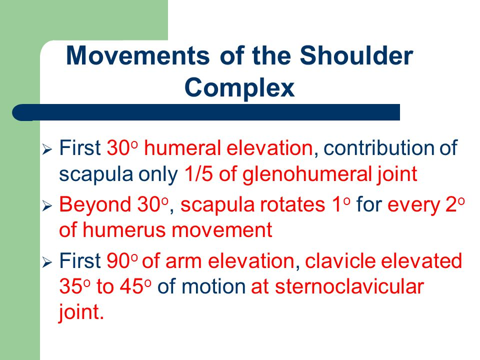  First 30 o humeral elevation, contribution of scapula only 1/5 of glenohumeral joint  Beyond 30 o, scapula rotates 1 o for every 2 o of humerus mov