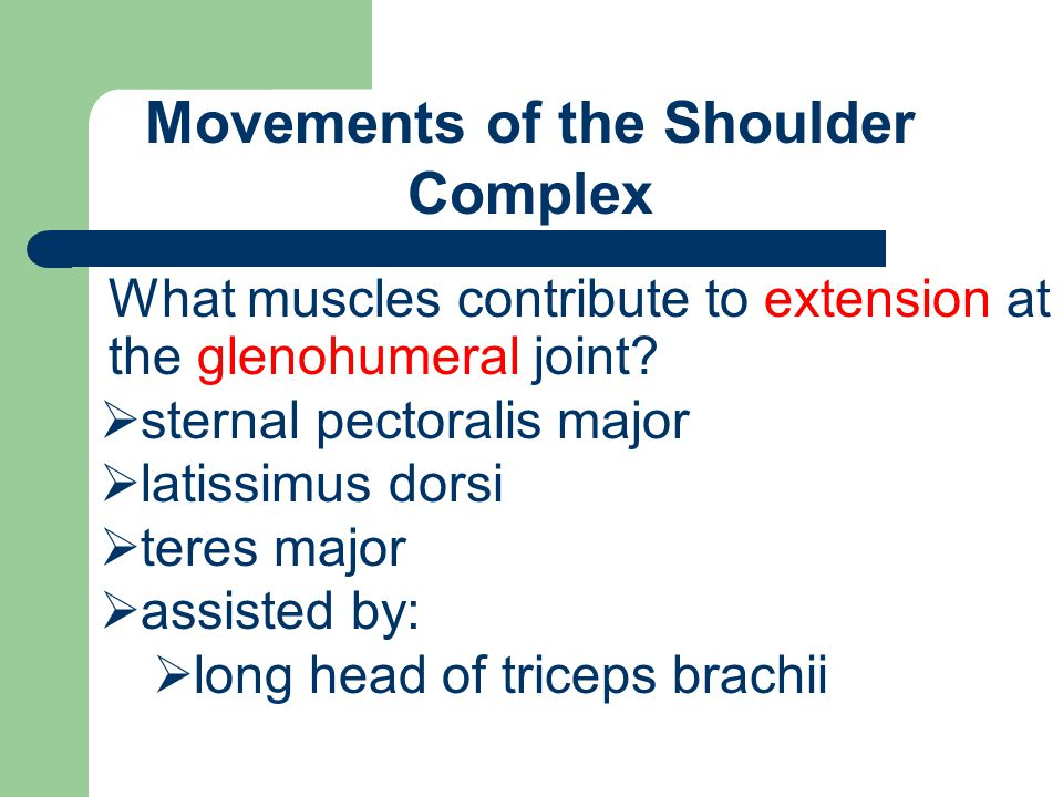 Movements of the Shoulder Complex What muscles contribute to extension at the glenohumeral joint?  sternal pectoralis major  latissimus dorsi  tere