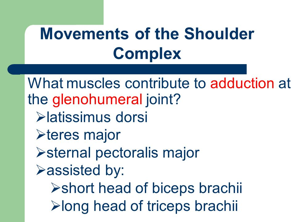 Movements of the Shoulder Complex What muscles contribute to adduction at the glenohumeral joint?  latissimus dorsi  teres major  sternal pectorali