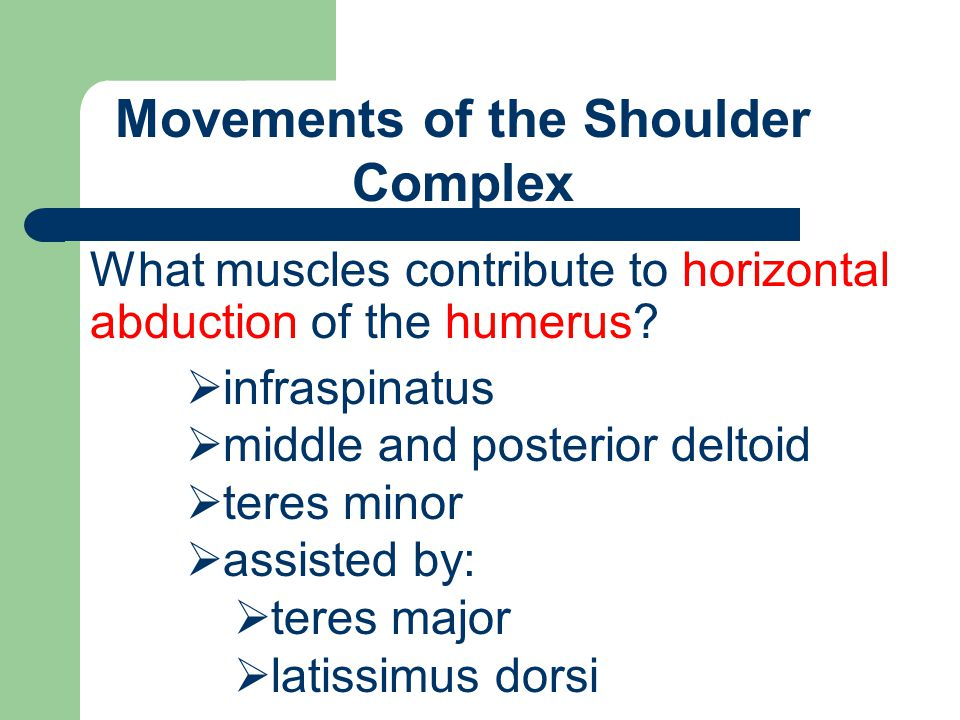Movements of the Shoulder Complex What muscles contribute to horizontal abduction of the humerus?  infraspinatus  middle and posterior deltoid  ter