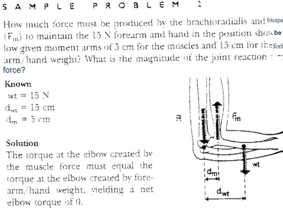 biceps fore force? be